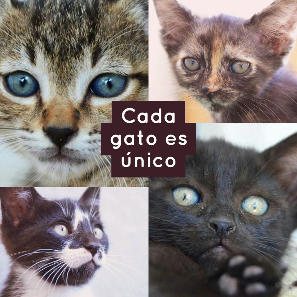 gato-unico