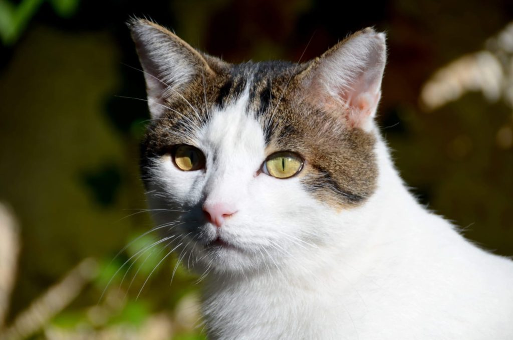 gato-apadrina