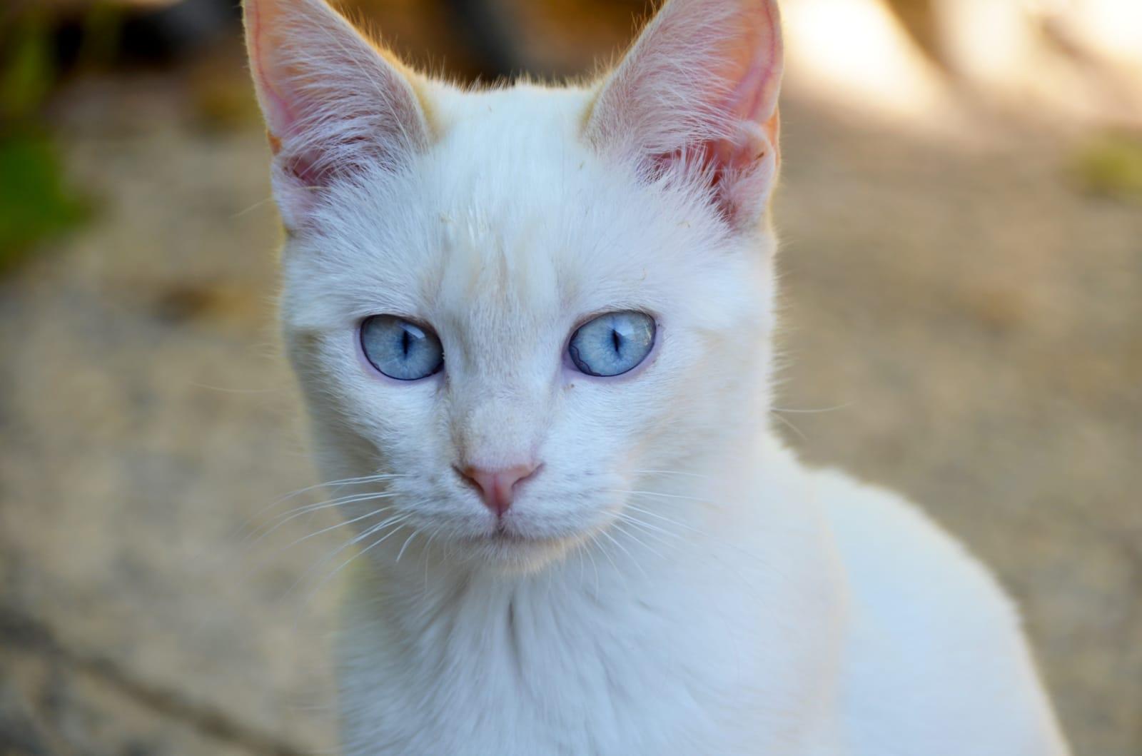 gato-hazte-voluntario