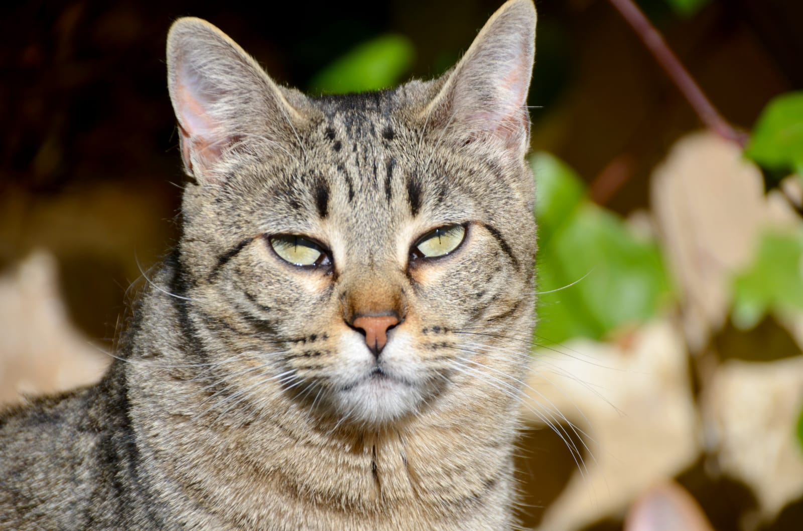gato-hazte-socio
