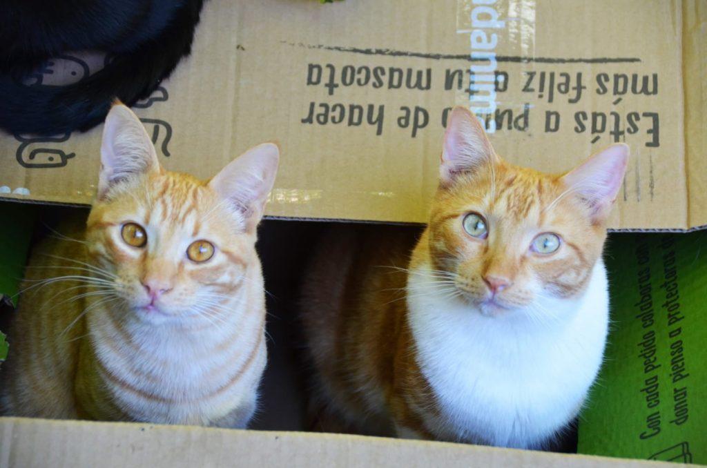 gatos-casa-acogida